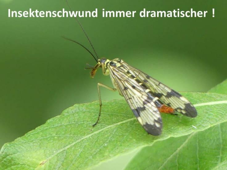 Insektenschwund 1