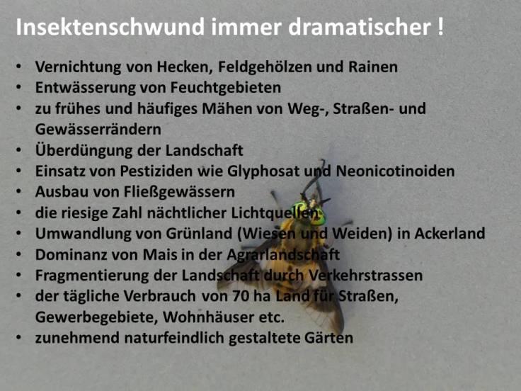 Insektenschwund 2