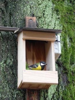 Vogelgucker 11