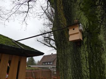 Vogelgucker 4